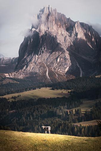 istock Seiser Alm - Dolomites Italy 1069498316