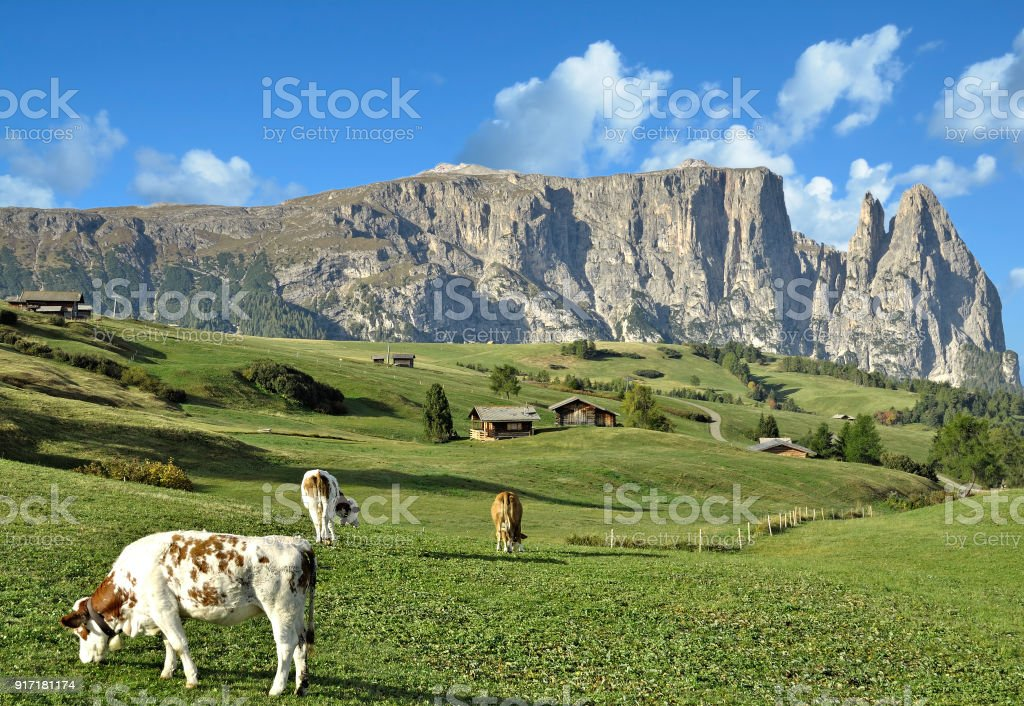 Seiser Alm with Schlern Mountain,South Tirol,Italy stock photo