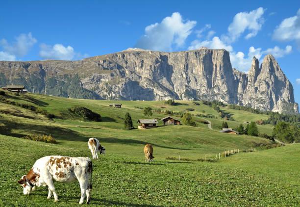 seiser alm mit schlern berg, südtirol, italien - seiser alm stock-fotos und bilder