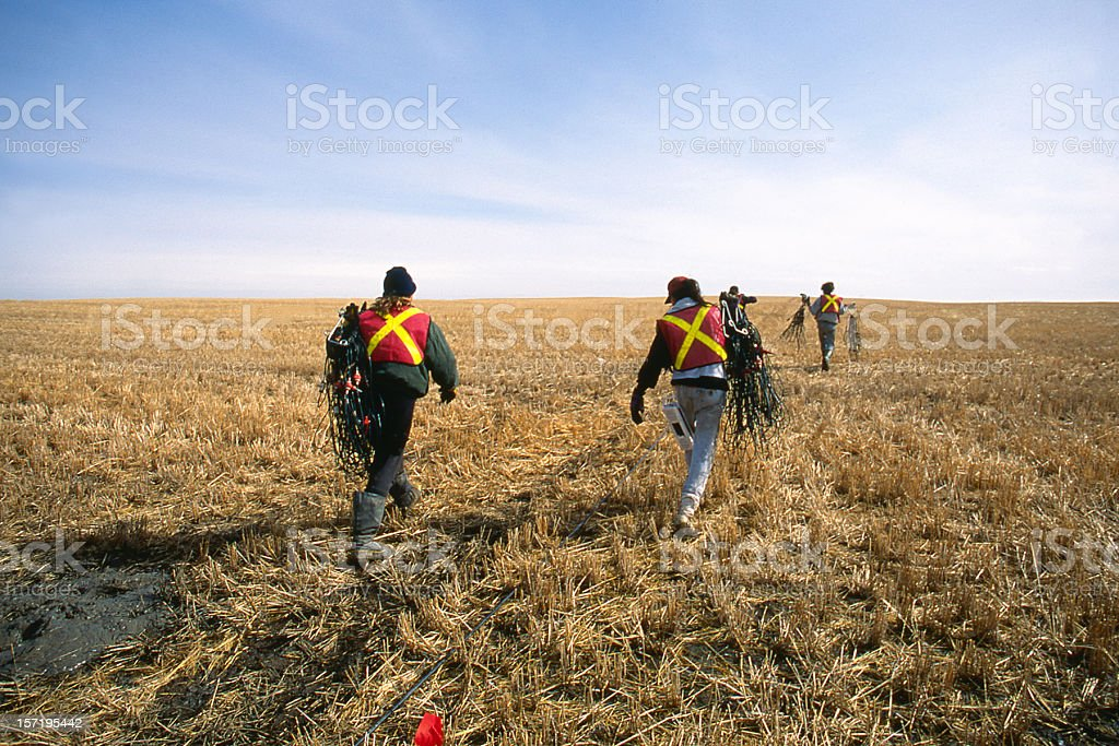 Seismic Line Crew Laying Geophone Cable royalty-free stock photo