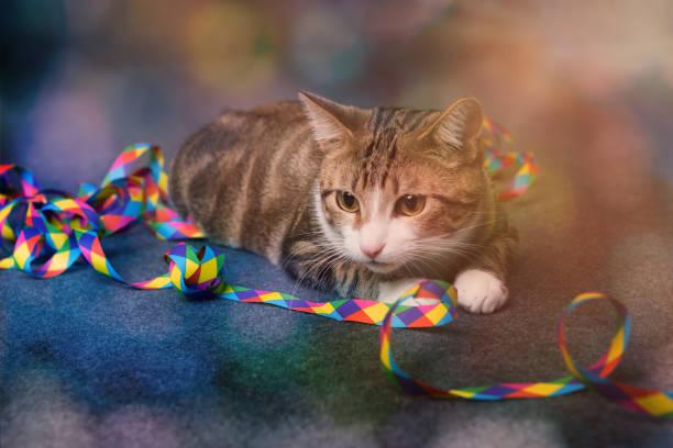 seitanblickparty cat - котик яркий стоковые фото и изображения