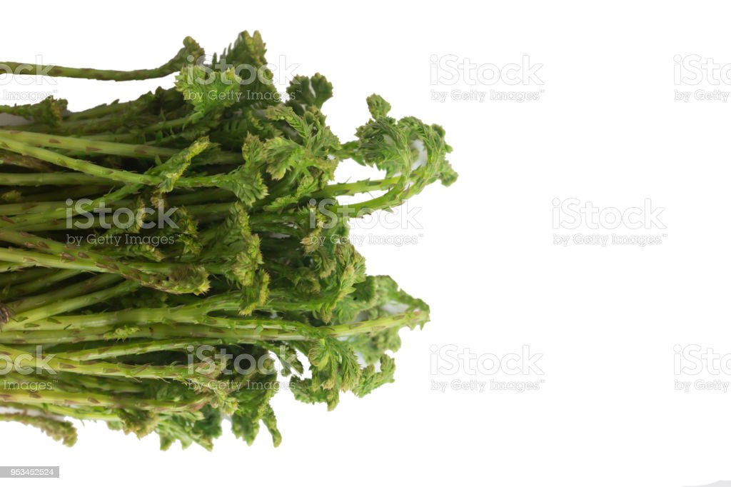 Selaginella argentea Spring Vegetable stock photo