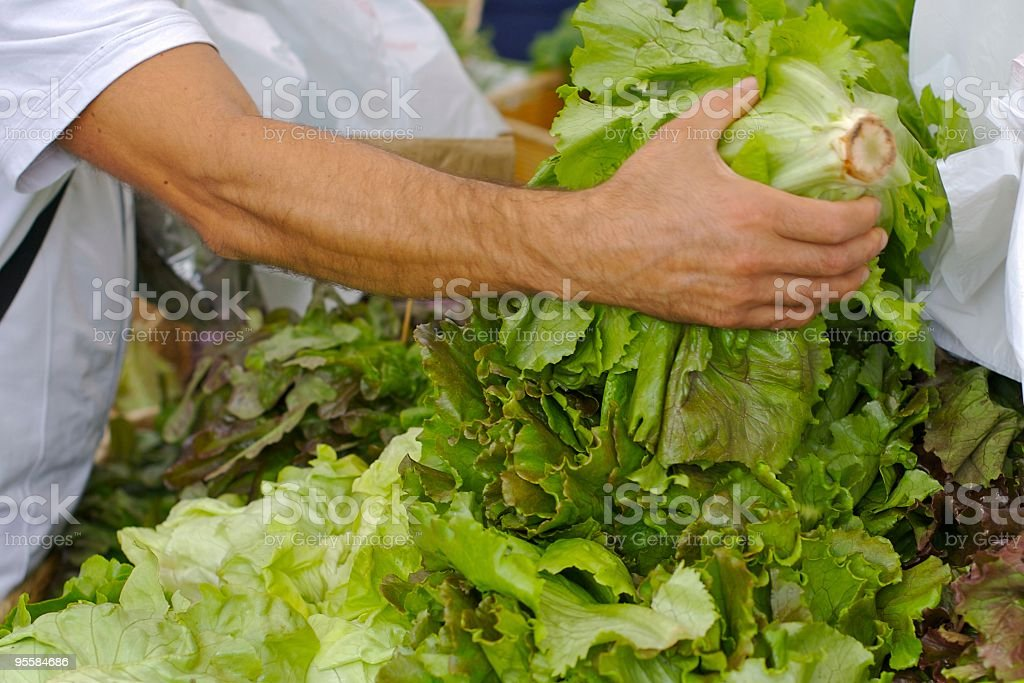 Selecting a head of fresh lettuce at Farmers Market royalty-free stock photo