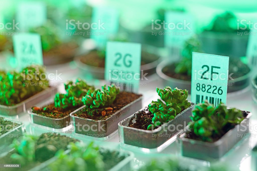 DNA selection: genetically modified organism, plants and seeds, biotechnology experiment stock photo