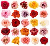 More roses in my lightbox VALENTINE'S DAY: