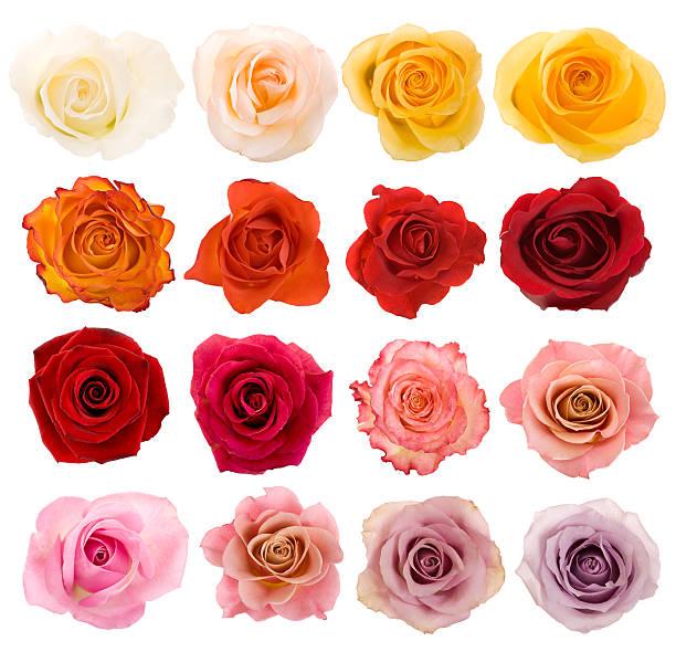 Selection of beautiful roses picture id182389086?b=1&k=6&m=182389086&s=612x612&w=0&h= wzm dedpxb43ssb1bsvjnpkmdu7vsndjjihvnlxkpi=