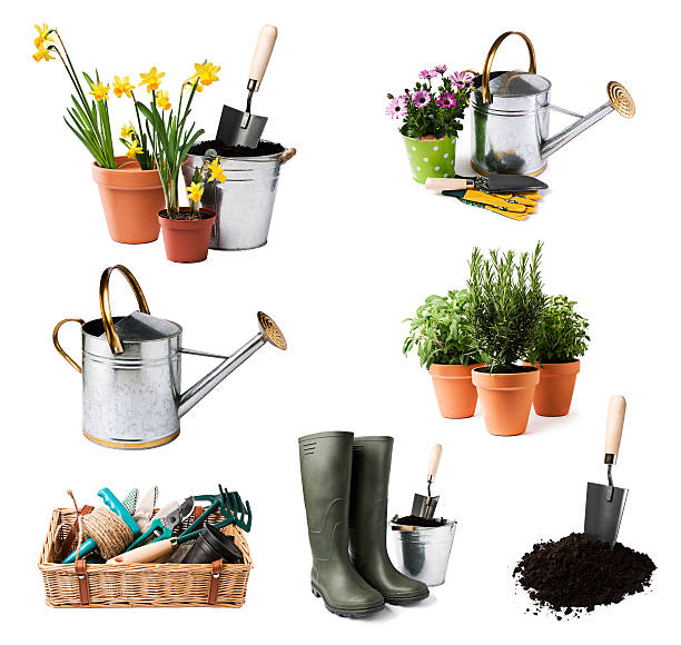 A selection of gardening tools and pots of plants Gardening tools and flowers isolated on white gardening equipment stock pictures, royalty-free photos & images