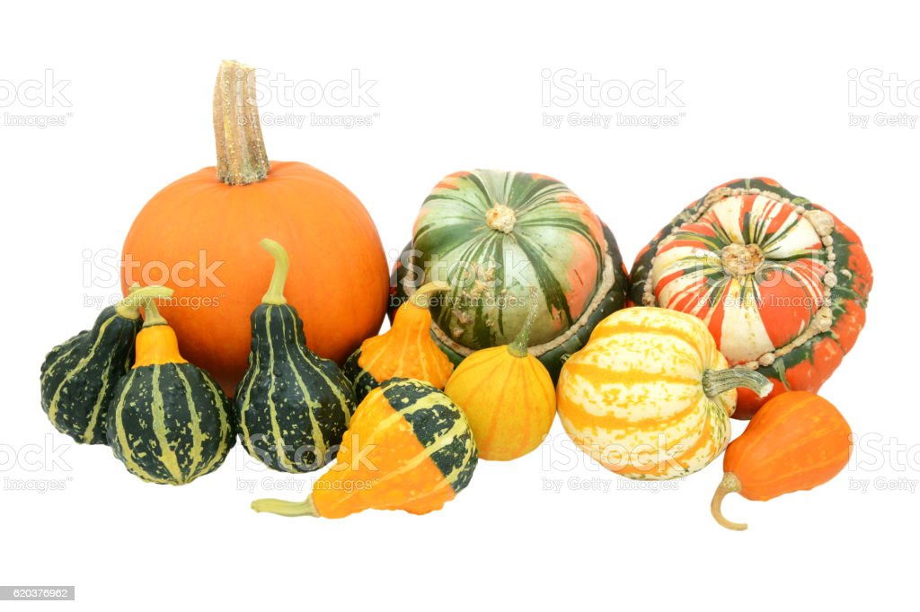 Selection of gourds, pumpkins and squashes zbiór zdjęć royalty-free