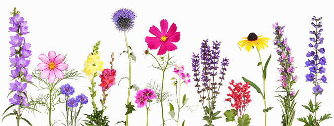 Popular perennials for the garden. A selection of different brightly colored flowers.