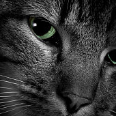 A close-up of a tabby cat's green eye.