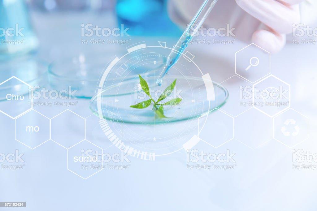 enfoque selectivo una pequeña planta orgánica, Fondo de belleza, científico muestreo un extracto químico de orgánicos naturales, investigar y desarrollar a fondo, - Foto de stock de ADN libre de derechos