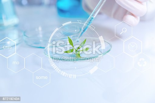istock selective focus a small organic plant, Beauty background, scientist is sampling a chemical extract from organic natural, research and develop background, 872192434