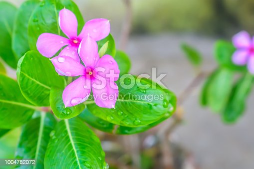 Selective Focus: Colorful flowers with green leaves on backgrounds, Love concept, Templates for design.