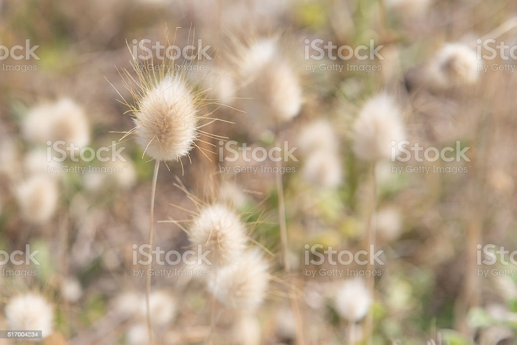 Selective focus grass background stock photo