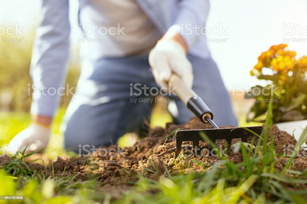 Selective focus of a gardening tool royalty-free stock photo