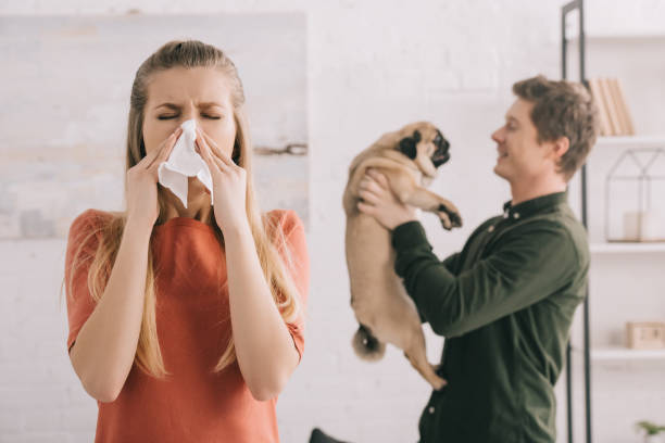 selective focus of blonde girl allergic to dog sneezing in white tissue near cheerful man holding pug selective focus of blonde girl allergic to dog sneezing in white tissue near cheerful man holding pug allergy stock pictures, royalty-free photos & images