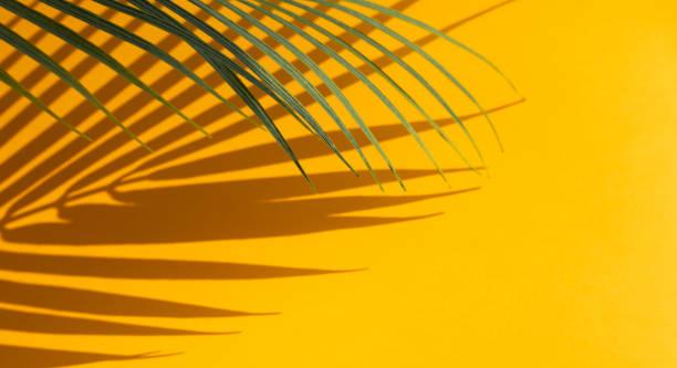異國情調的椰子葉的選擇性焦點與陰影上的顏色背景。 - 熱帶式樣 個照片及圖片檔