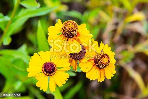 istock Selective focus of purple flowers with defocused background 1093937754
