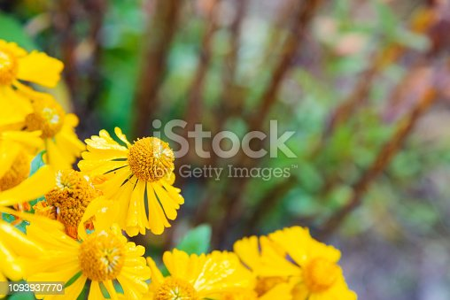 istock Selective focus of purple flowers with defocused background with copy space 1093937770