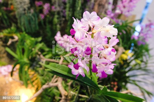 istock Selective focus of purple orchid flowers (Cypripedioideae). 891572032