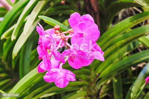 istock Selective focus of purple orchid flowers (Cypripedioideae). 891572040