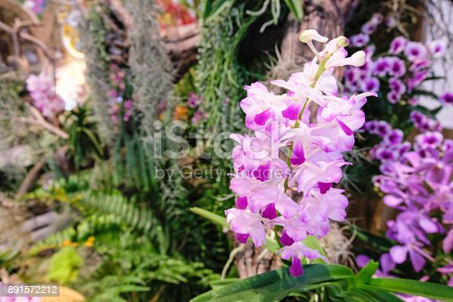 Selective focus of purple orchid flowers (Cypripedioideae).