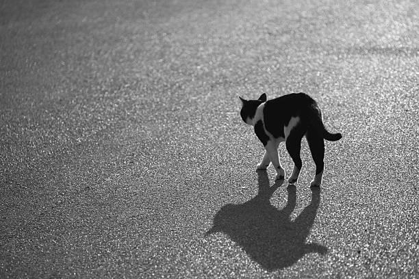 Selective focus of the cat walk in the street picture id524387840?b=1&k=6&m=524387840&s=612x612&w=0&h=jqm 9zy6rc5bzpmghlbc1pj0xpcj2ejeyw5poazzhju=