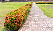 Selective focus on a pedestrian path made of bricks and cement for walking the garden with red flowers and green grass. Nature background and peacefulness concept