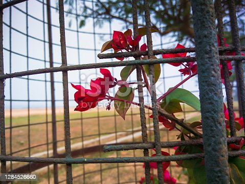 selective focus on red flowers in a flower cage