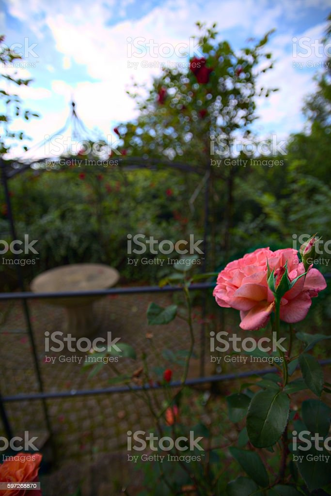 Selective focus shot of a rose garden near castle Neuenbuerg Lizenzfreies stock-foto