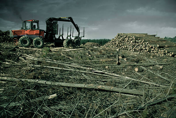 Self Destruction A large tractor idles at the edge of a forest it has almost destroyed. deforestation stock pictures, royalty-free photos & images