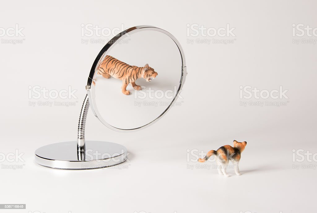 self-confidence front of the mirror - cat stock photo