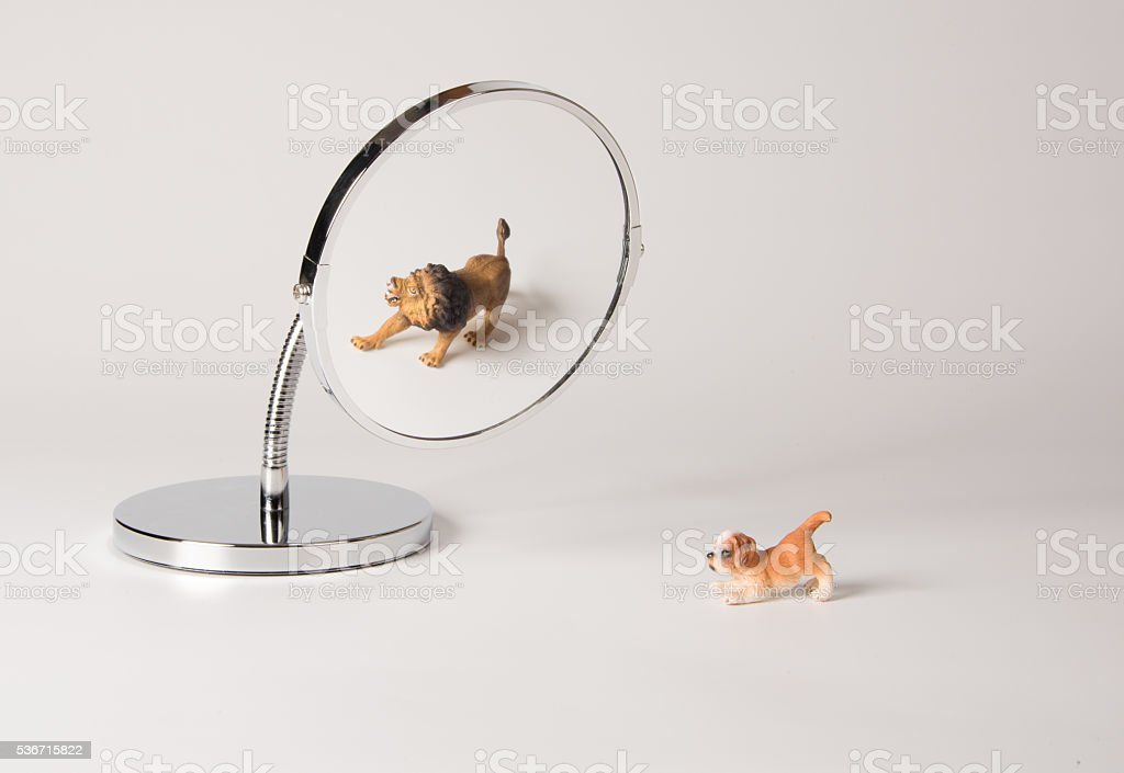 self-confidence front of the mirror - puppy stock photo