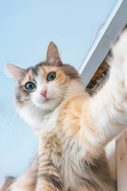 Selfie cat at home picture id935859196?b=1&k=6&m=935859196&s=612x612&w=0&h=dwfp9w74iwnguxctooe udwesh9fs c vjlvzxrtr1s=