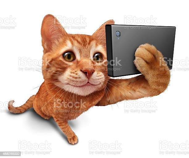 Selfie cat picture id488255002?b=1&k=6&m=488255002&s=612x612&h=hwiinpmoi4avlfsukdoszl3v9sbvxw46adkyv odyrg=