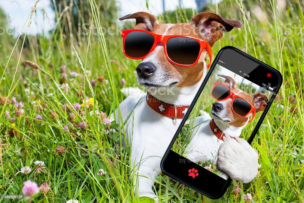 selfie dog in meadow stock photo
