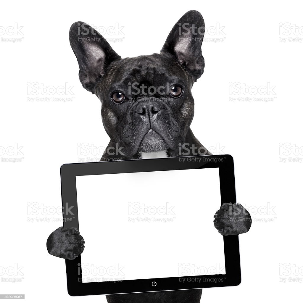 selfie dog stock photo