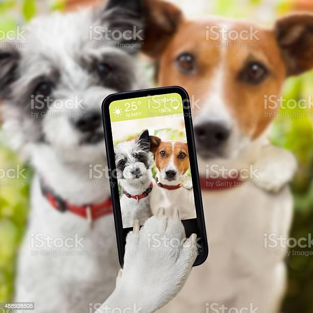 Selfie dogs picture id488938505?b=1&k=6&m=488938505&s=612x612&h=6ysoxb6odyppuq2d3exaxqvcdk2l s3plzpcntvci0a=