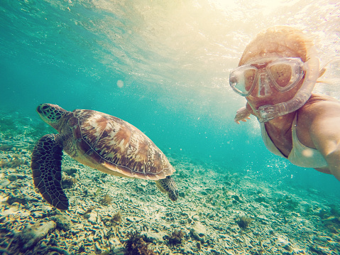 Cheerful girl takes a selfie underwater with beautiful sea turtle in crystal clear water in the Gili Islands near Bali, Lombok region, Indonesia. People travel summer fun vacations tropical climate concept. One person wanderlust traveling the world.