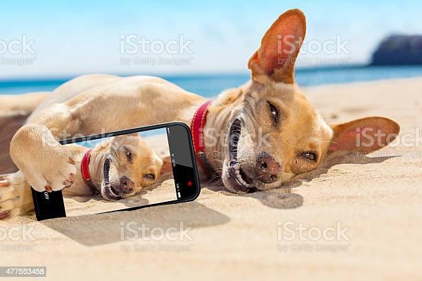 Selfie summer dog picture id477553458?b=1&k=6&m=477553458&s=612x612&h=s1dj3usfzc7tjuo4hx0jwn8fywxunka9 ogp8abgp y=