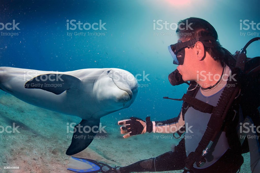 selfie with dolphin underwater coming to diver stock photo