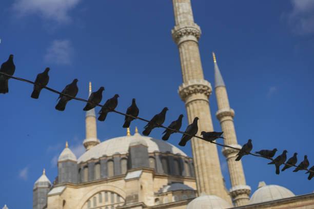 selimiye moschee und tauben davor - edirne stock-fotos und bilder