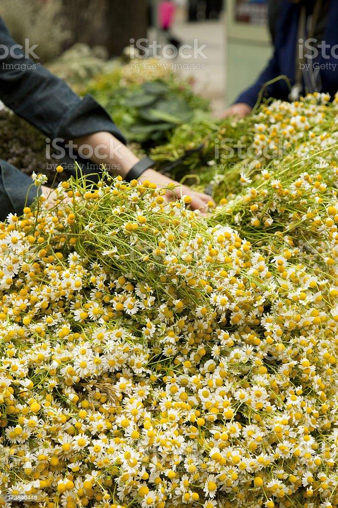 Selling chamomile royalty-free stock photo