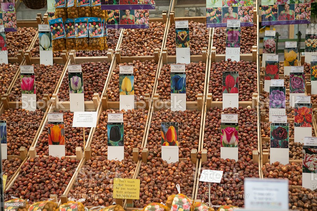 selling traditional tulip seeds  at flower market of amsterdam holland stock photo
