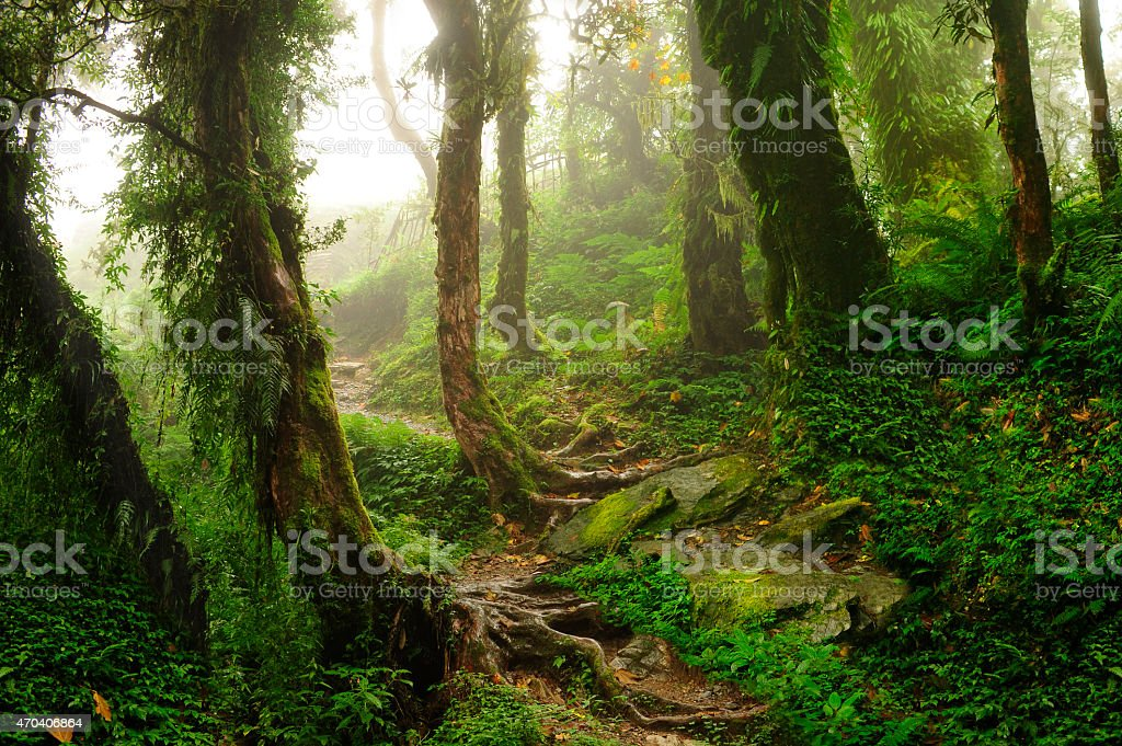 Selva de Nepal stock photo