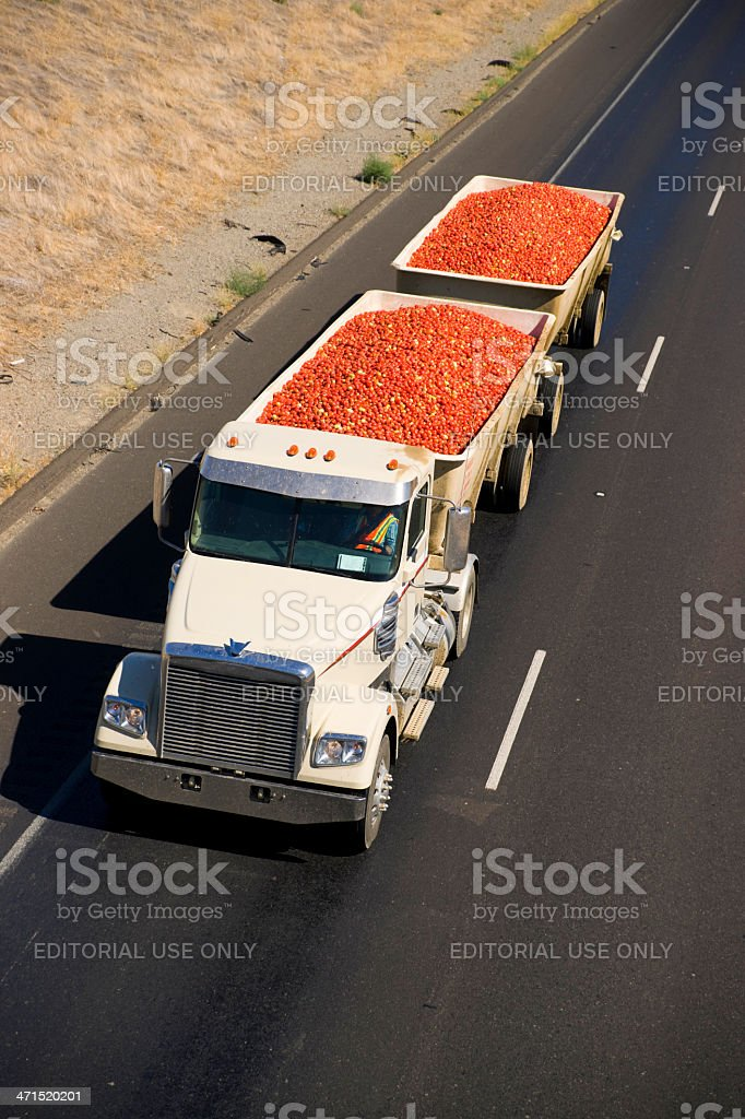 Semi Tractor Trailer Transport Truck Hauls Produce for Processing stock photo