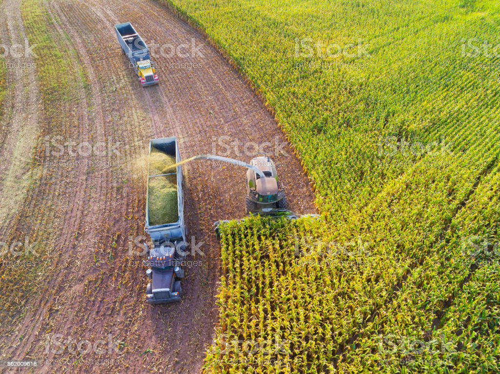 Semi truck and farm machine harvesting corn in Autumn stock photo