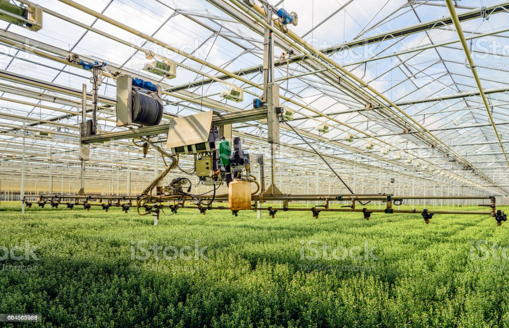 Semi-automatic spraying robot in a greenhouse specialized in the cultivation of chrysanthemum cut flowers stock photo