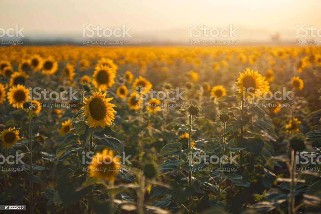 Sending - Off The Sun, Until The Morning stock photo