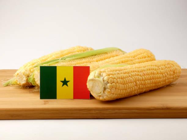 Bandeira do Senegal em um painel de madeira com milho isolado em um fundo branco - foto de acervo